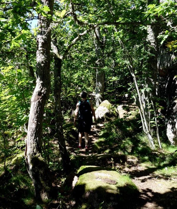 Blå Jungfrun. Blockterräng och tät skog på södra sidan. Foto Anders Ehrlemark 2013