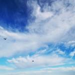 Fåglar himmel. Birds sky
